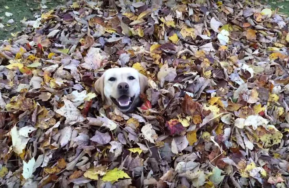 Wohl kaum einer freut sich SO sehr über den Herbst, wie dieser Vierbeiner