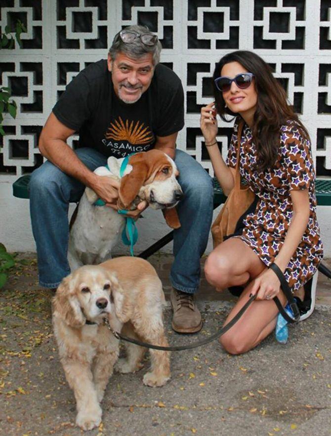 George et Amal Clooney et leurs deux chiens