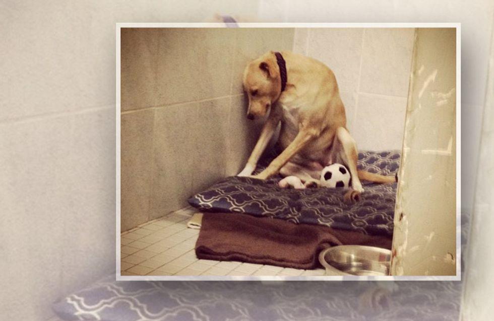 Das ist der wohl traurigste Hund der Welt: Lanas Geschichte zerreißt uns das Herz