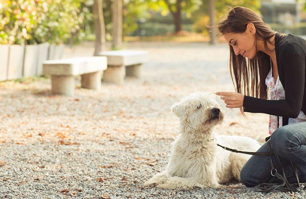 Por que adotar um cachorro pode mudar a sua vida