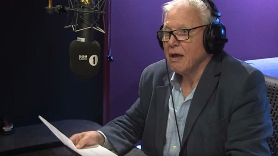 David Attenborough Narrating Adele's 'Hello' Is Just As Amazing As You'd Expect