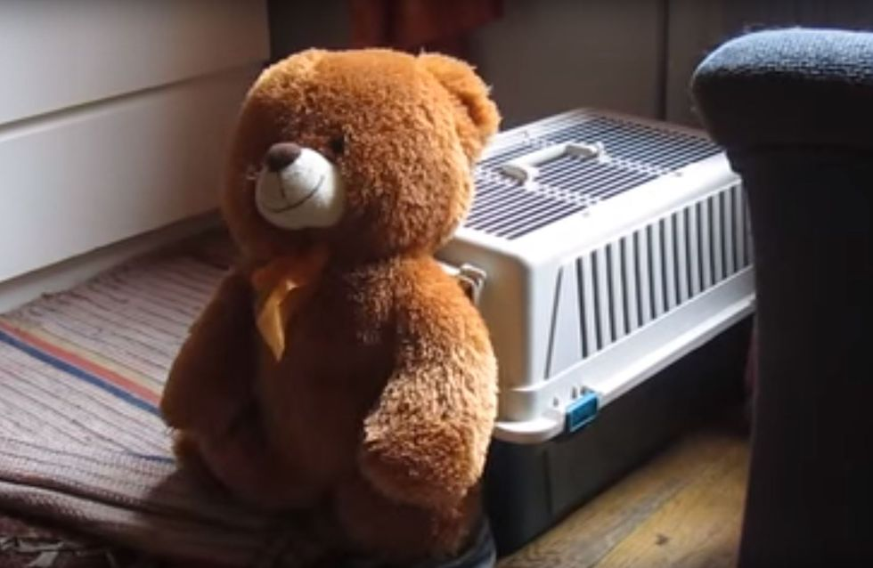 """""""Rein mit dir!"""" Was dieser Dackel mit seinem Teddy anstellt, müsst ihr gesehen haben!"""