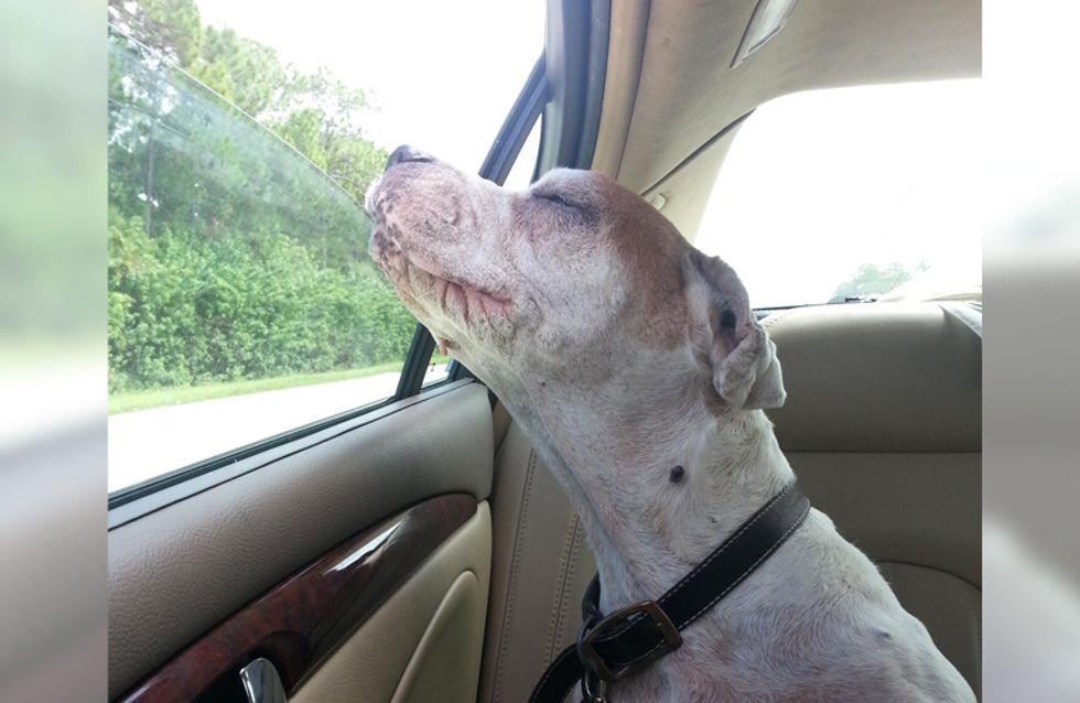 Dieser Vierbeiner genießt die letzte Autofahrt seines Lebens - und uns bricht es das Herz