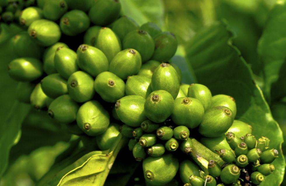 Tudo sobre o café verde, o novo queridinho da sua dieta