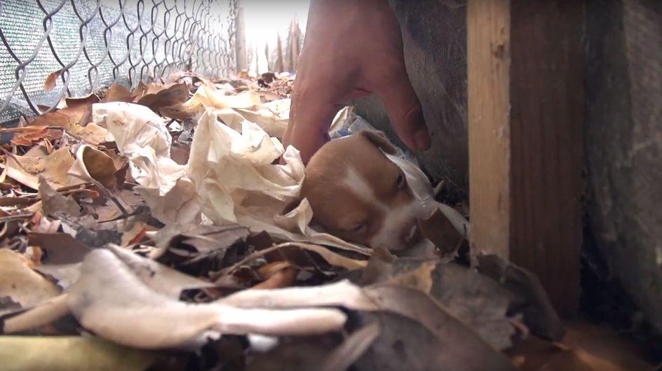 Dramatische Rettung in letzter Sekunde: Eine Hündin und ihre Welpen kämpfen ums Überleben