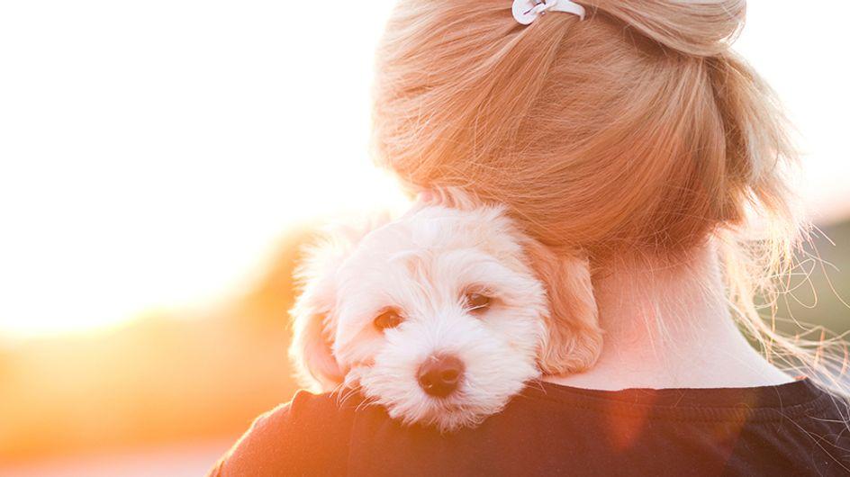 9 lições de amor que você pode aprender com seu cachorro