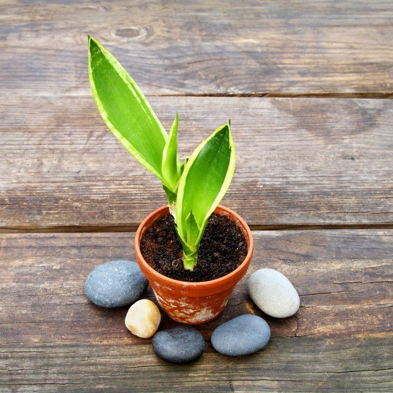 5 Pflegeleichte Zimmerpflanzen Die Garantiert überleben