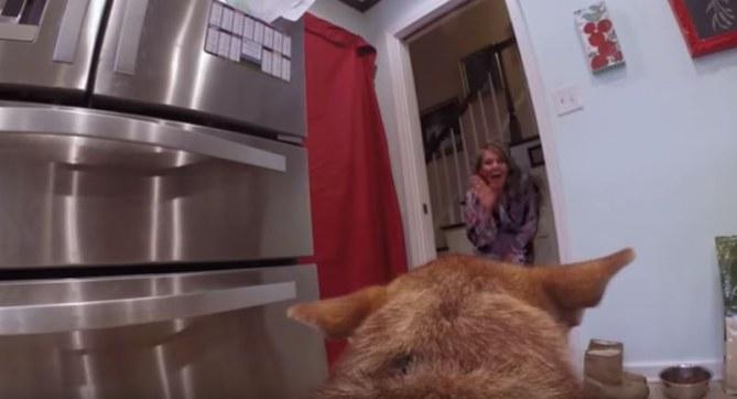 Vídeo de boda grabado por un perro