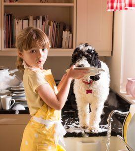 Pros y contras de tener una mascota en casa