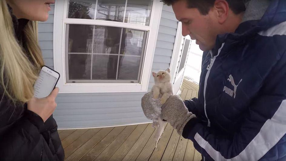 Sie finden ein Kätzchen leblos und erfroren im Schnee - doch dann erleben sie ein Wunder