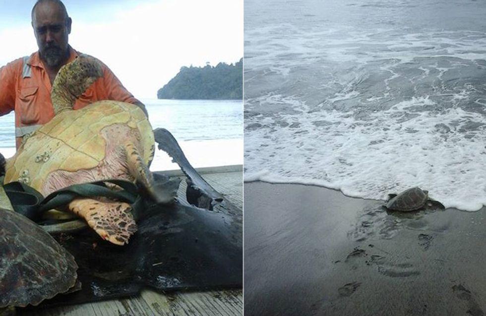 Als dieser Mann zwei Schildkröten auf dem Fischmarkt entdeckt, tut er etwas Großartiges