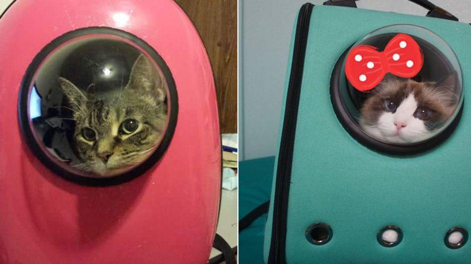 Mit dieser genialen Erfindung muss deine Katze nie wieder alleine zu Hause bleiben