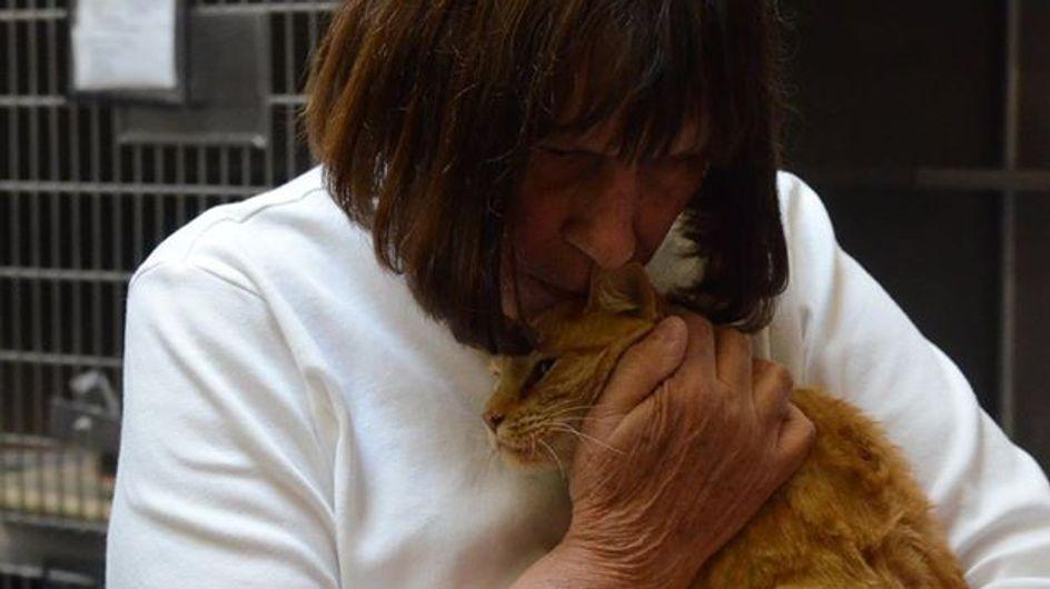 8 ans après leur séparation, ce chat et sa famille ont enfin été réunis