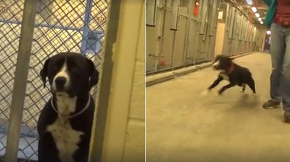 Raus aus dem Tierheim: Dieser schüchterne Vierbeiner kann sein Glück kaum fassen