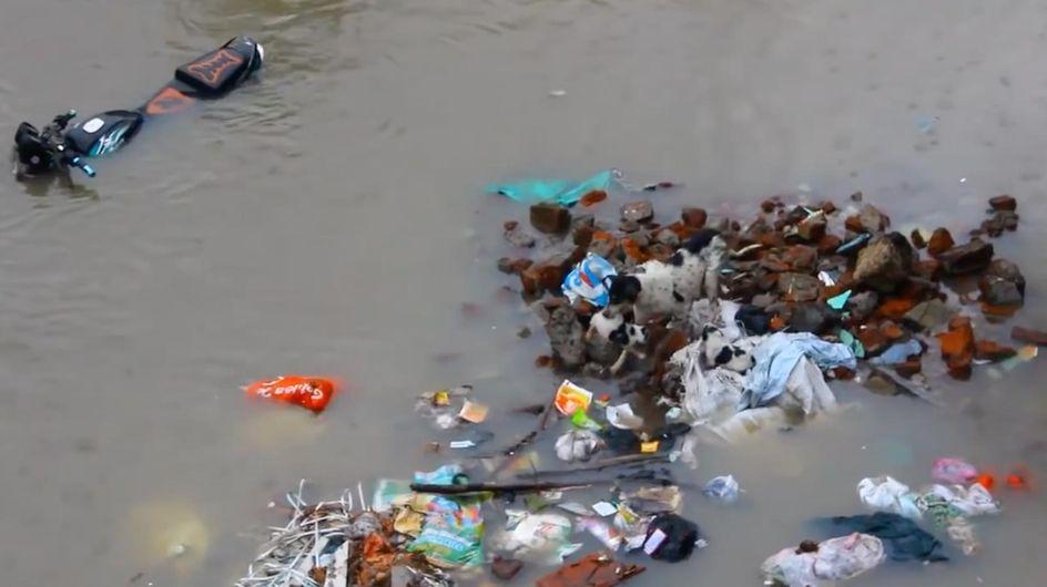 Überlebenskampf in der Regenflut: Diese Hündin ist eine Heldin!