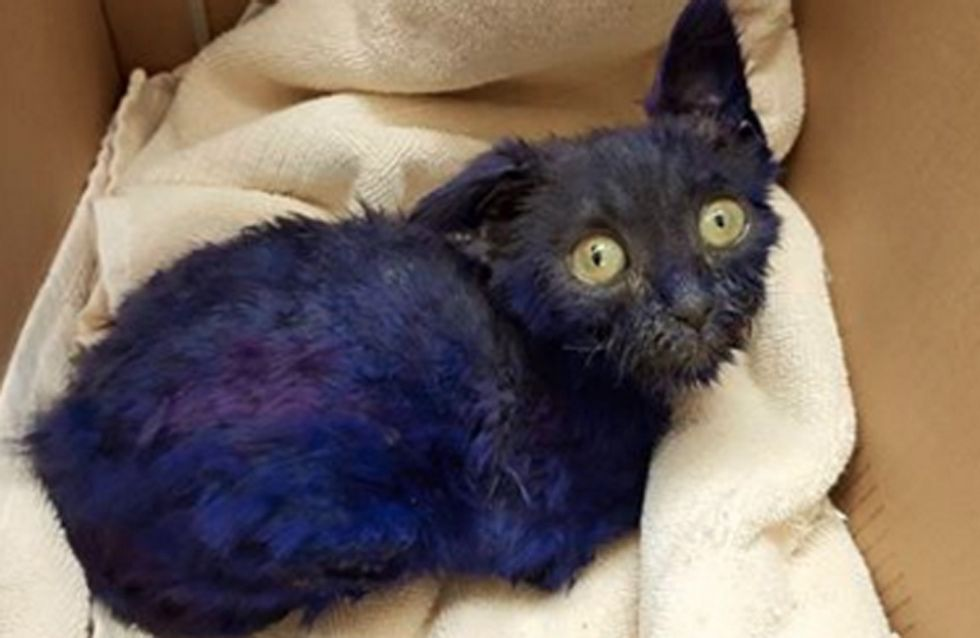 These Photos Of The Rescue Of An Abused Kitten Will Break Your Heart Then Put It Back Together