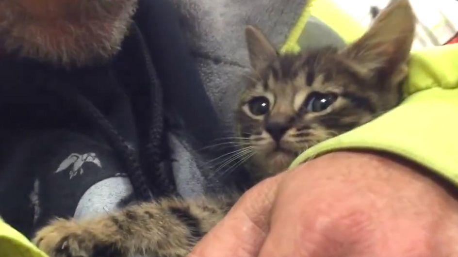 33 Stunden gefangen: Was Retter für dieses Kätzchen tun, ist einfach wundervoll!