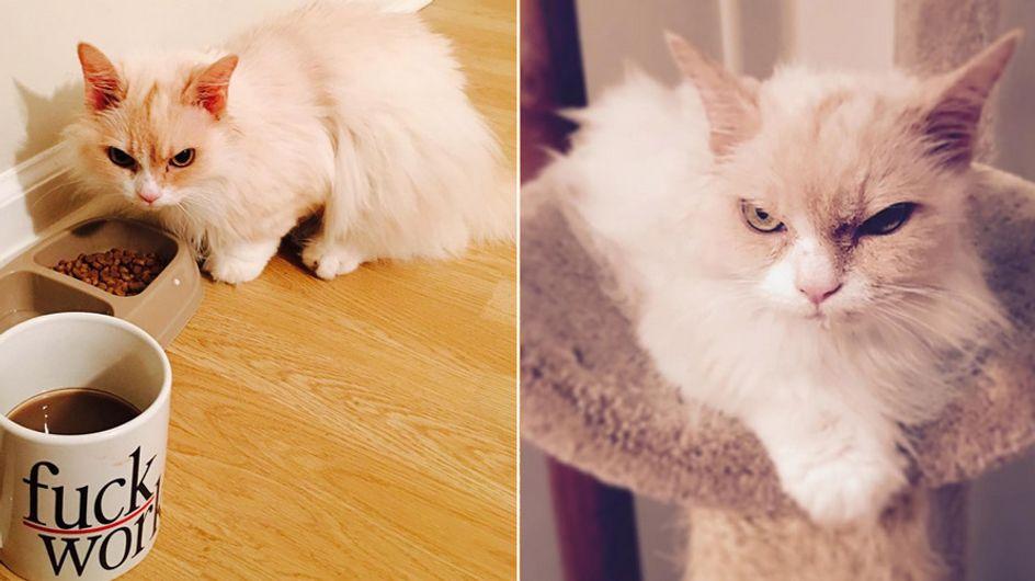 Jetzt muss Grumpy Cat sich aber warm anziehen - Angry Pearl ist der neue Internet-Star