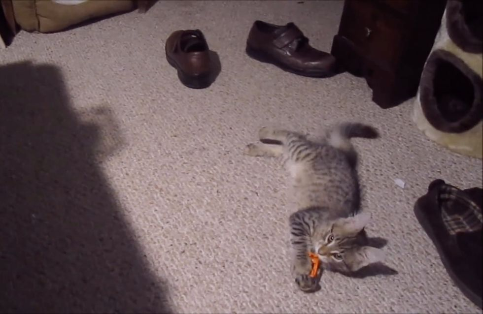 Dieses putzige Kätzchen hat einen ETWAS ANDEREN Schuhtick!