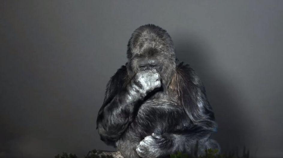 Bewegende Botschaft: DAS hat uns dieser Gorilla über die Zerstörung der Natur zu sagen