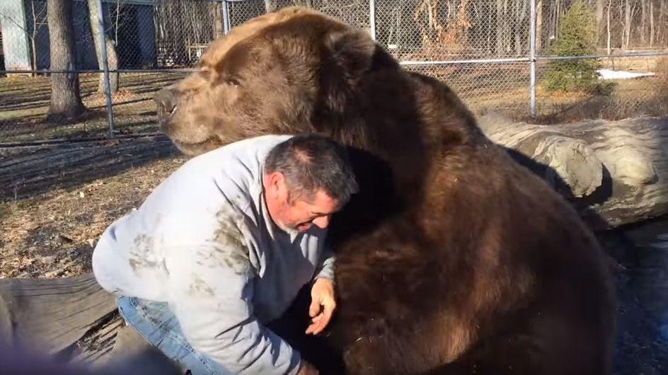 Bitte nicht zuhause nachmachen: Dieser Mann kuschelt mit einem ausgewachsenen Bären