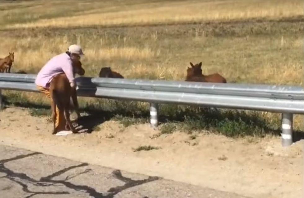 Rettung in letzter Sekunde: Dieses hilflose Fohlen schwebt mitten auf der Autobahn in Lebensgefahr