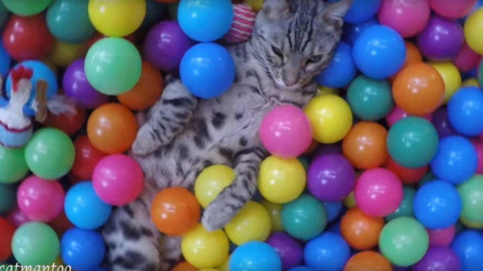 Il gatto acrobata tra le palline colorate
