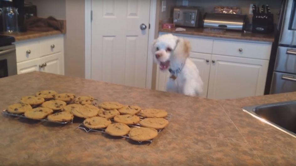 Was dieser Vierbeiner leistet, um an die frisch gebackene Kekse zu kommen, ist der Hammer