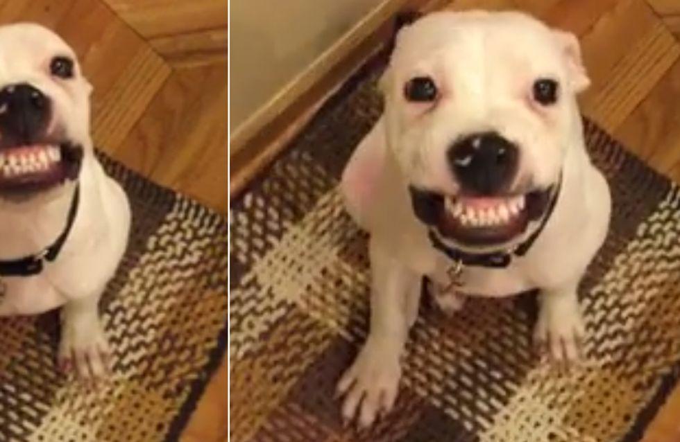 Le talent caché de ce chien va vous faire mourir de rire (Vidéo)