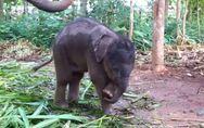 Qu'est-ce que c'est que ça ? : Quand un bébé éléphant découvre qu'il a une tro