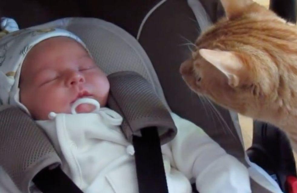 11 animaux stupéfaits de se retrouver nez à nez avec un nouveau-né