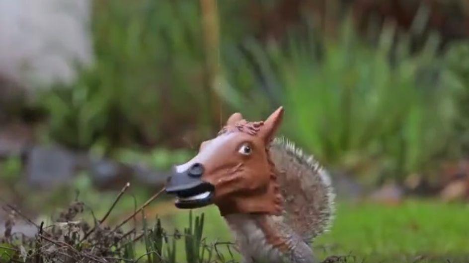Ein Eichhörnchen mit einem Pferdekopf?! Die wohl genialste Futterstation aller Zeiten