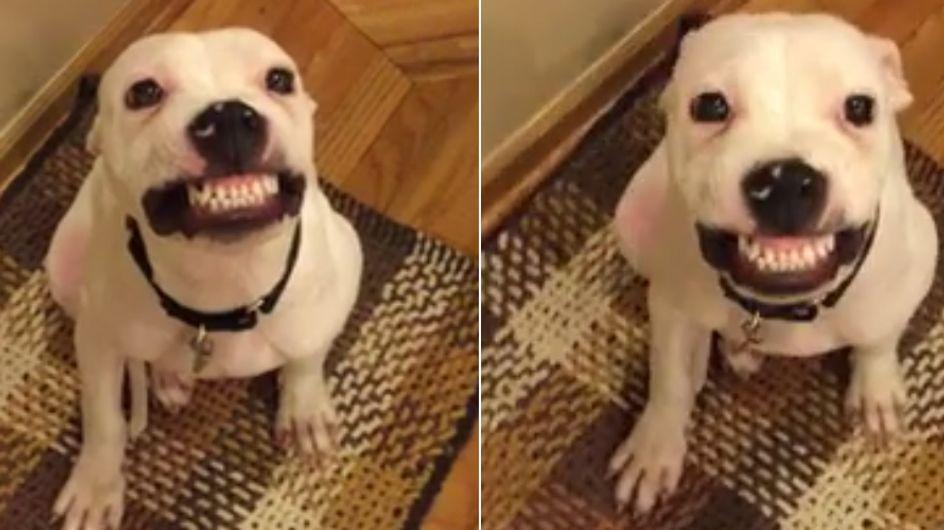 Il cane che sorride