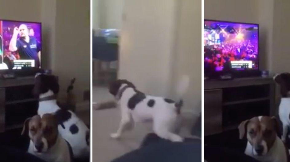 Tierischer Darts-Fan: Dieser süße Vierbeiner versucht die Pfeile im Wohnzimmer zu fangen!
