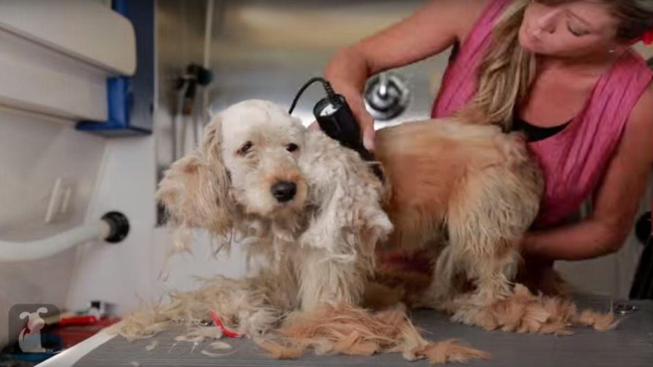Alle Hunde verdienen eine 2. Chance: Charlie macht eine unglaubliche Verwandlung durch