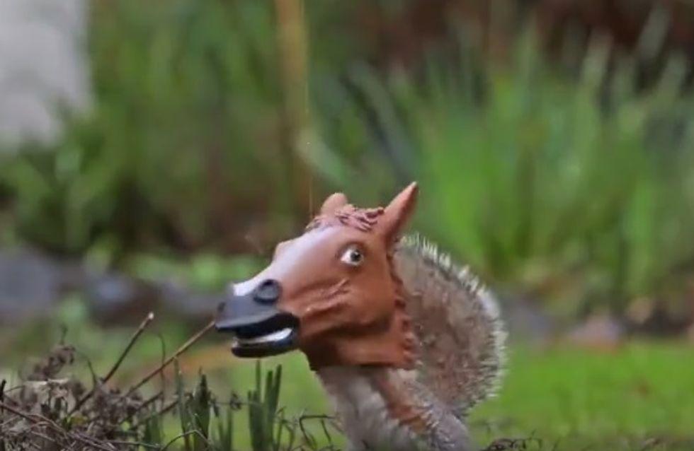 Un écureuil qui se prend pour un cheval, vous avez déjà vu ça ? (Vidéo)