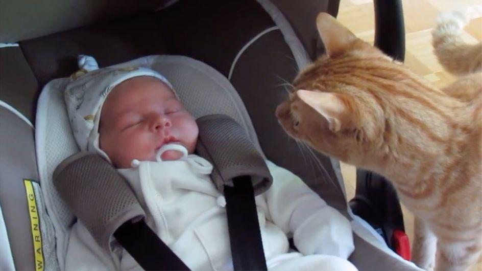 11 reazioni buffe di animali che vedono un neonato per la prima volta