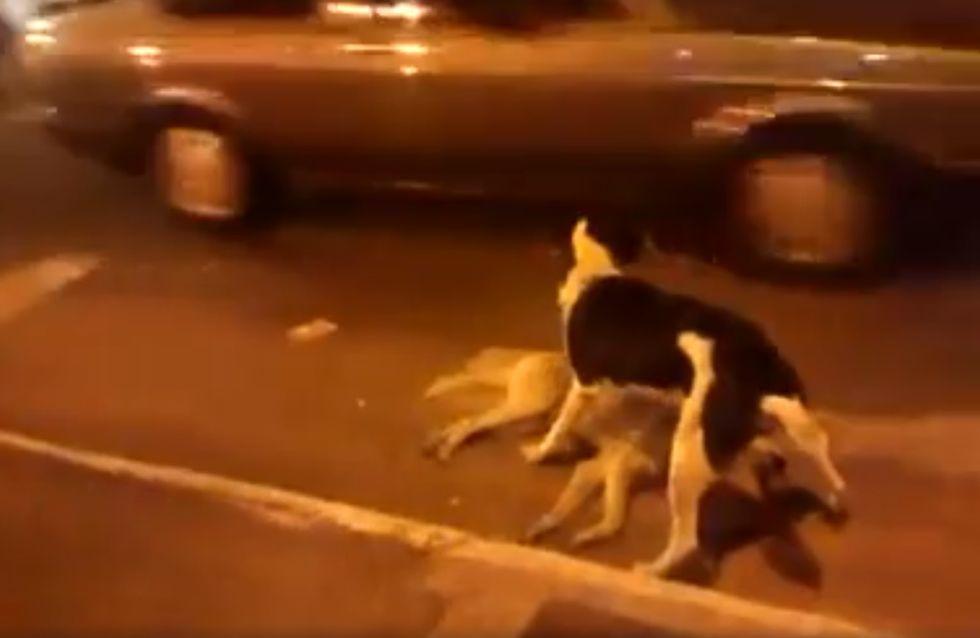 Il cane veglia il suo amico morto sul ciglio della strada