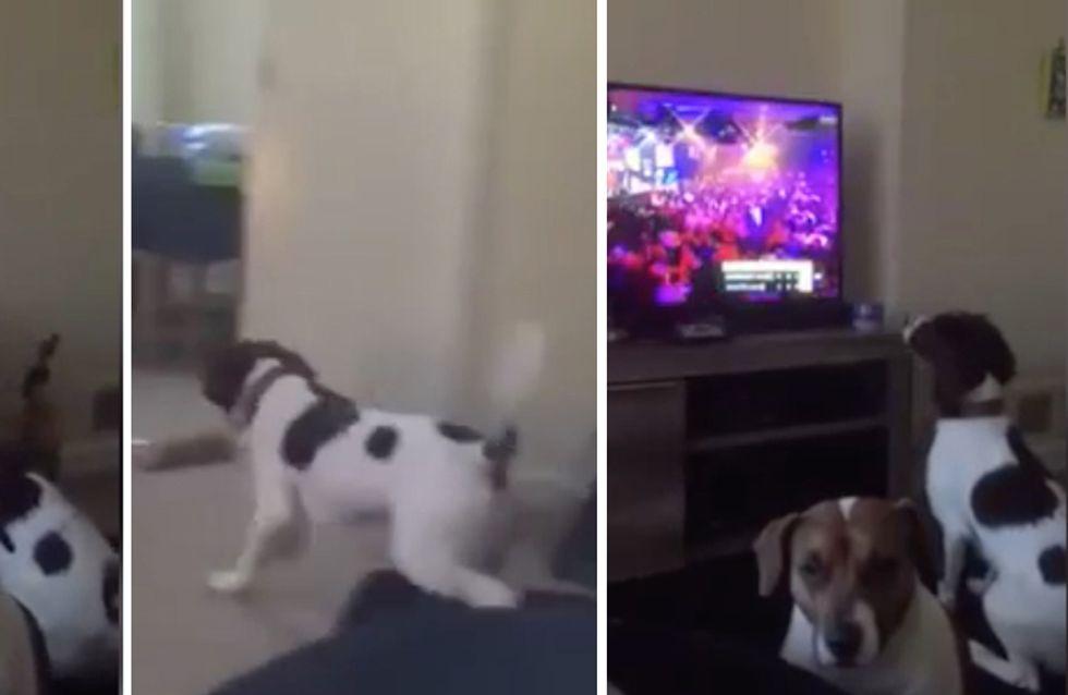 Ce chien tente de ramasser les fléchettes lancées à la télé (Vidéo)