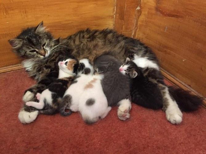 Mustafa Efe recueille les chats errants dans sa mosquée