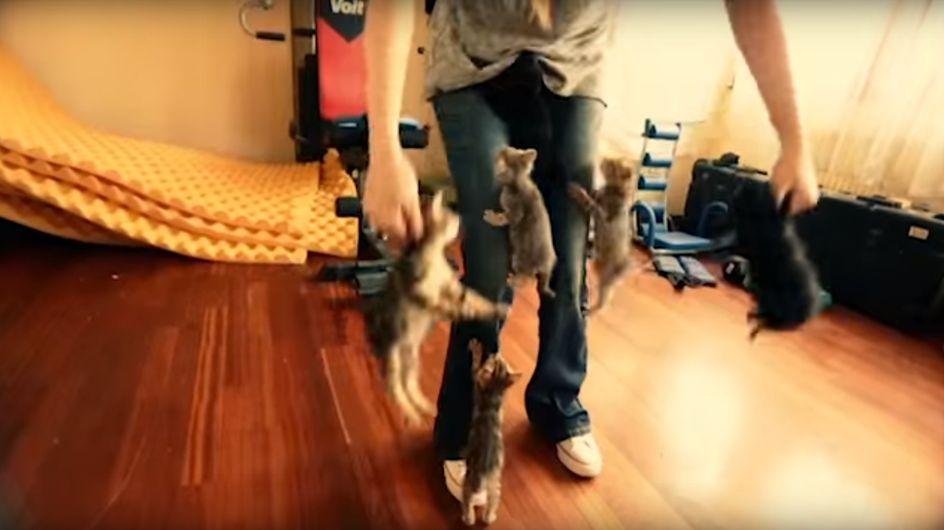Sechs auf einen Streich: Die süßen Kletterkünste dieser Kätzchen bringen ihre Besitzerin zum Verzweifeln