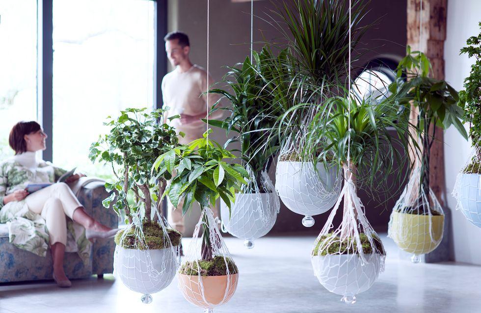 Les plantes totem, ces plantes qui nous font du bien