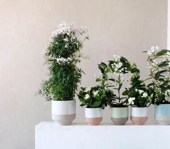 J'embaume mon intérieur avec des plantes à fleurs blanches parfumées !