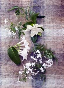 Plantes à fleurs blanches