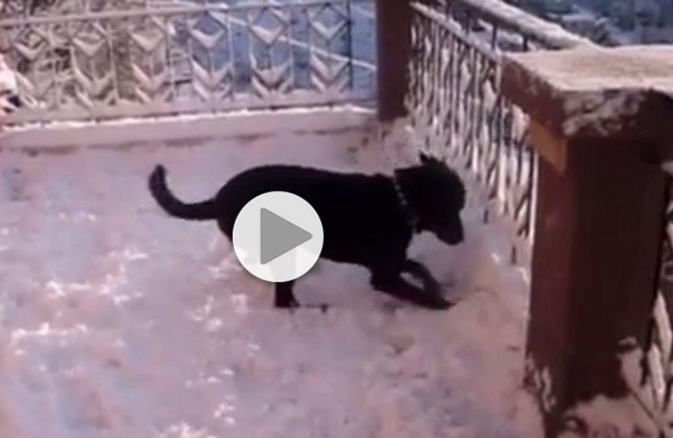Ce chien voit la neige pour la première fois, et visiblement il adore ça (Vidéo)