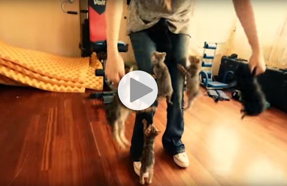 Attention, cette femme est victime d'une attaque de chatons (Vidéo)