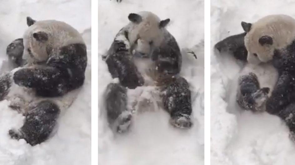 Il panda che scopre la neve