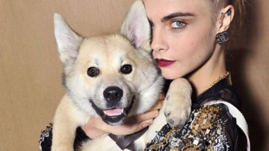 WTF : Le chien de Cara Delevingne au premier rang du défilé Chanel