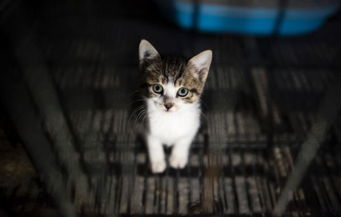 Une unité spéciale créée à New York contre la maltraitance animale