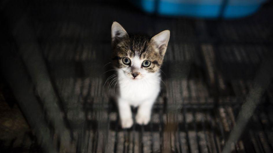 La police de New York crée une unité spéciale contre la maltraitance animale